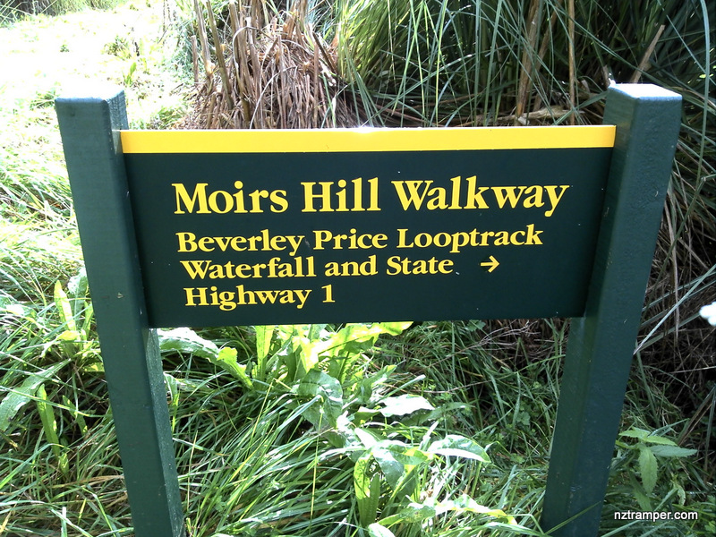 ... Junction of Beverley Price Loop Track and forest Road