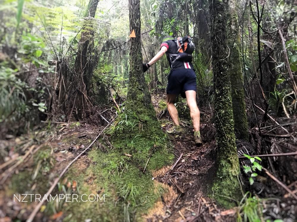 Trail Running – Upper Mangatawhiri Dam to Pukapuka Track Loop in Hunua