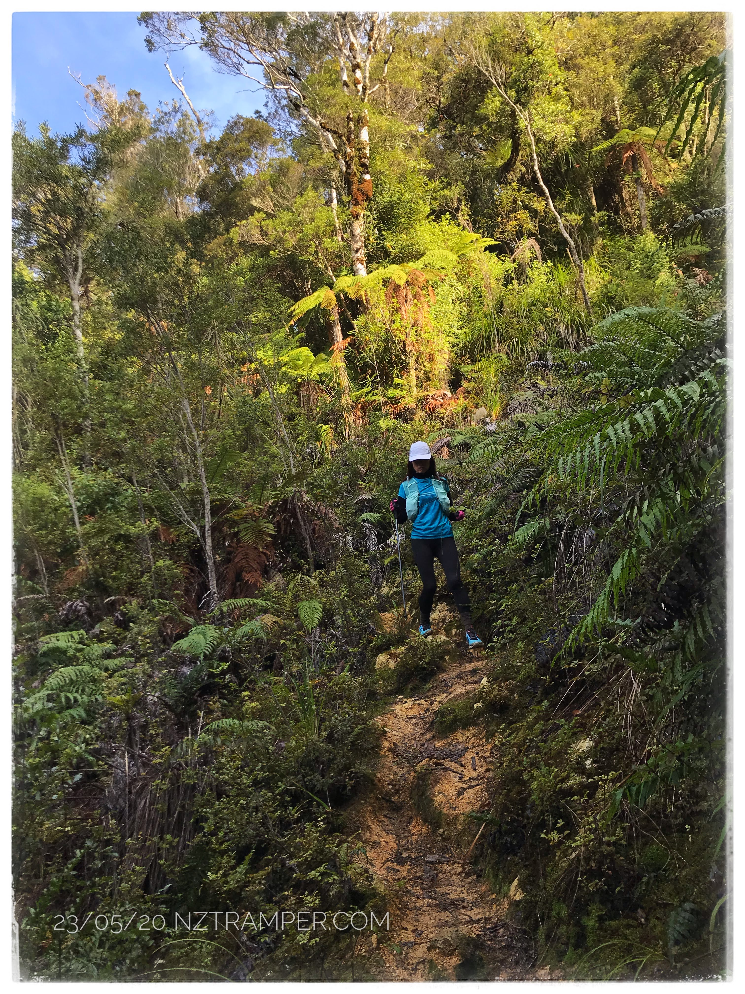 Trail running - Karaka Track to Crosbies Hut and return in Thames